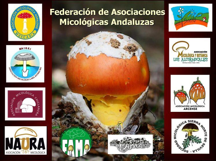 Asociaciones de FAMA-1